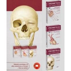 PROMETEUSZ Atlas Anatomii Człowieka - Komplet tomów