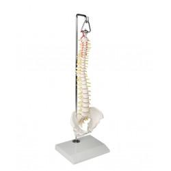 Miniaturowy model kręgosłupa