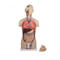Model torsu z otwartymi plecami