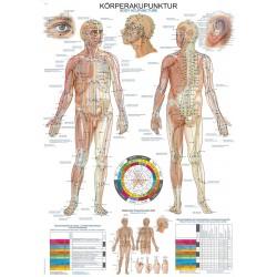 Tablica anatomiczna – Akupunktura
