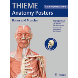 Plakat THIEME Anatomy Poster Prometheus Bones and Muscles