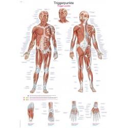 Tablica anatomiczna – Punkty spustowe