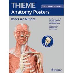 Plakat THIEME Anatomy Poster Prometheus Bones and Muscles